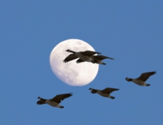 Artificial Lights have Devastating Effects on Many Bird Species