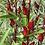 Thumbnail: Roselle/Hibiscus tea plant