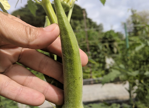 Lady Finger Okra