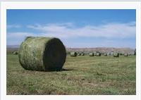 Keeping Alfalfa GE-FreeOn
