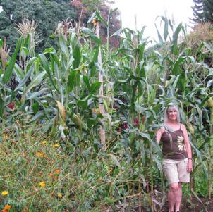 Summer Corn.jpg
