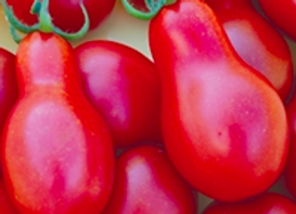 Austin Red Pear Tomato