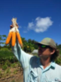 Oahu-nalo corn copy.jpg