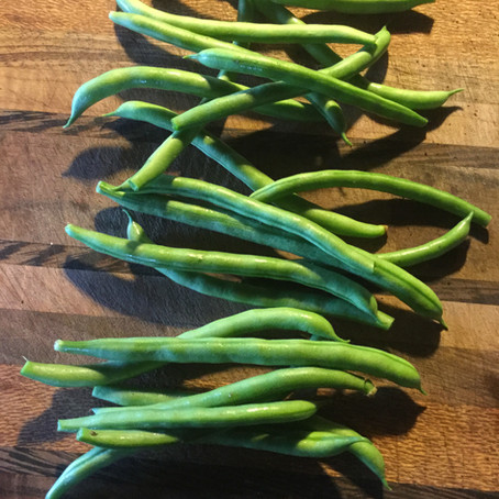 The Tall and The Short of Growing Beans in Hawai'i