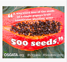 GE-Free Papaya