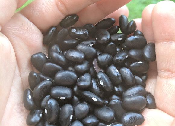 Eleʻele  Bush Bean