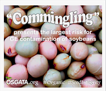 Keeping Soybeans Free of GE Contamination