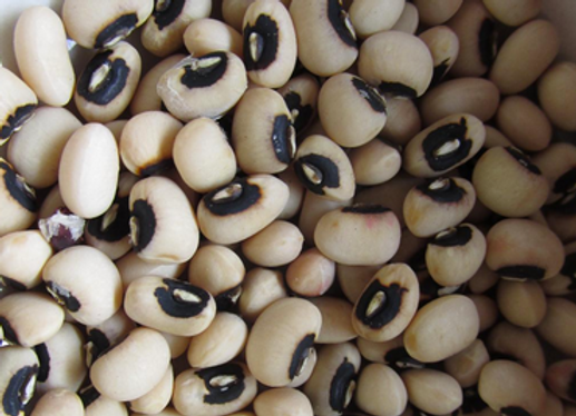 California Blackeye Cowpea no.5