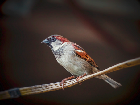 West Nile Virus Infectious Longer in Birds Exposed to Artificial Light at Night on February 22, 20