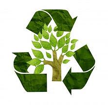 Holistic Tree Care