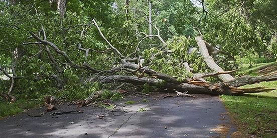 tree fell in driveway.jpg