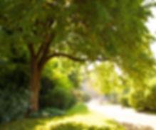 Arborists Love Trees