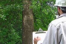tree inspection.jpg