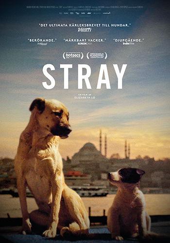 Stray_poster_web.jpg