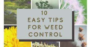 10 Easy Tips for Weed Control