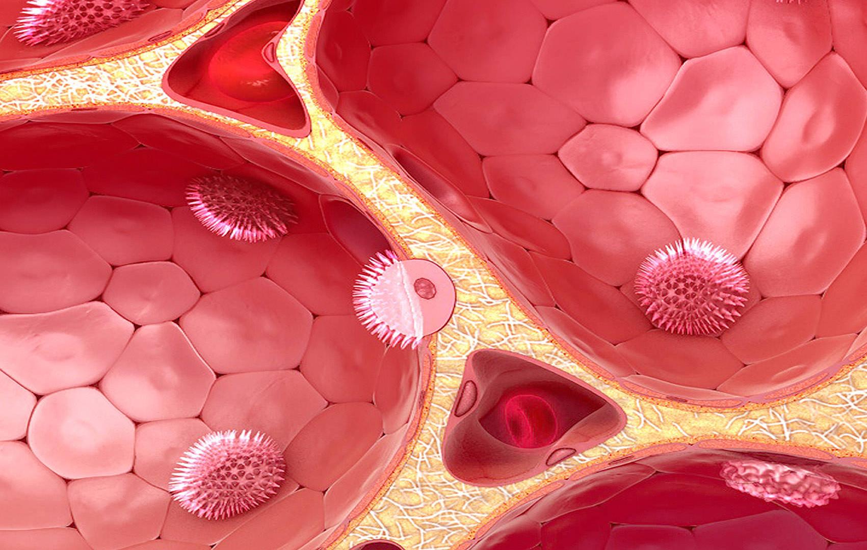 Alveolen - designidentity