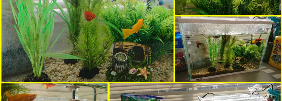 平成31年4月 熱帯魚で癒されてます!