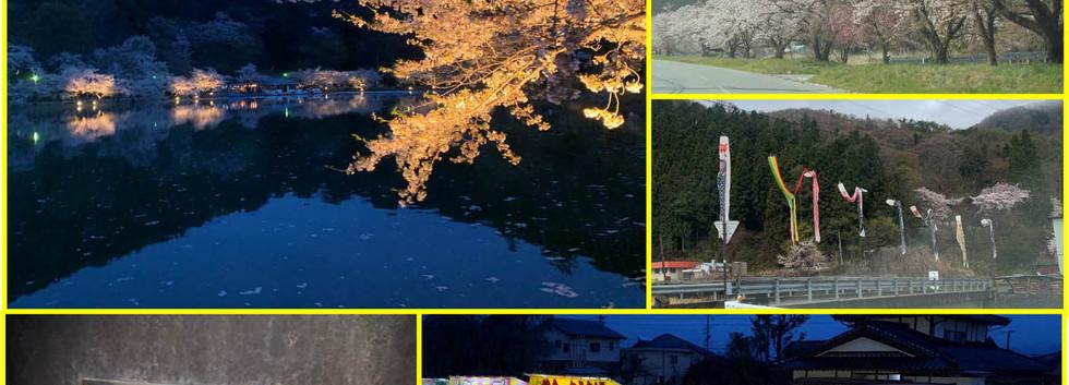 令和元年5月 鮎川沿いの桜と、須坂臥竜公園さくらまつり!