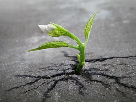Resiliência: ser forte apesar das tempestades