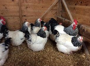 Chicken Sussex