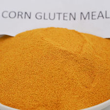 Corn-Gluten-Meal-in-Feed.jpg