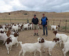 Boer Goats23149.jpg