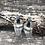 Thumbnail: Pheasant & Prairie Chicken (Labradorite)