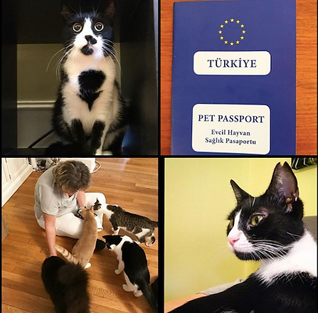 turkish cats.png