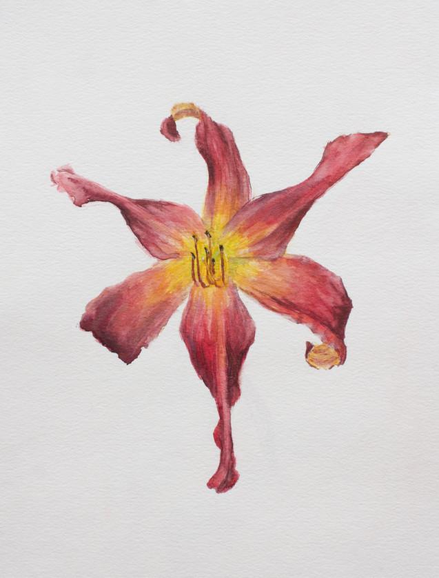 Chapman Hamborg Art floral watercolor da