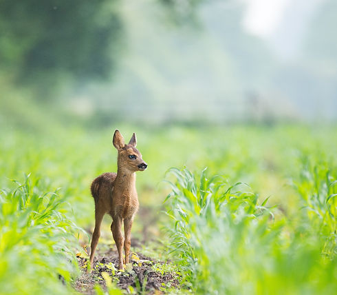 Bambi_edited.jpg