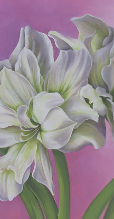 Two amaryllis Wix.JPG