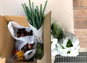 有機野菜2