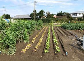 乾燥野菜作りをスタートさせます