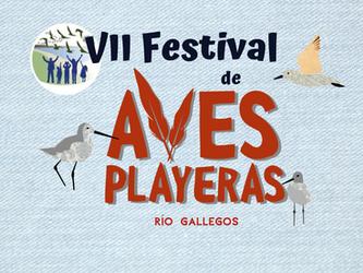 Comienza el VII Festival de Aves Playeras de Río Gallegos
