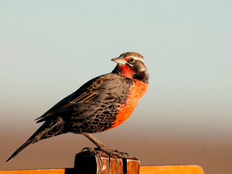 Para mirar con atención: especies comunes en Río Gallegos
