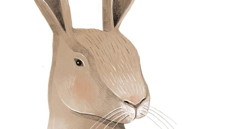 Johanna_Hager_Illustration (42).jpg