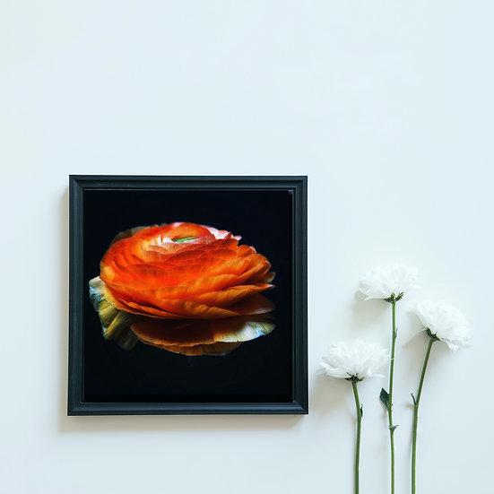 Fleur Orange 30x30. Encadré. Ref15