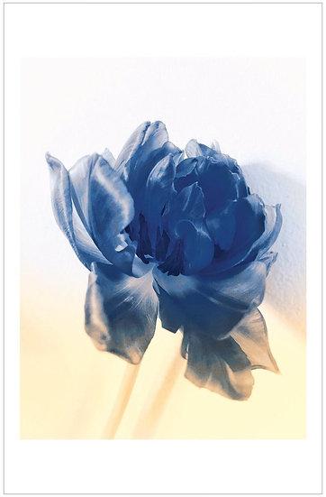 Affiche bleue
