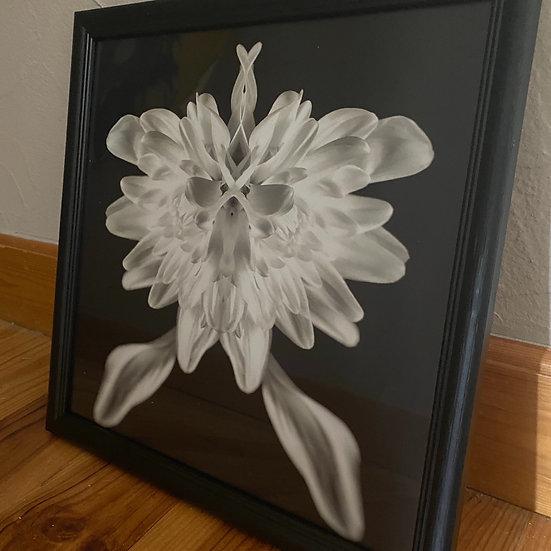 Fleur Noir et Blanc 30x30. Encadré. Ref07