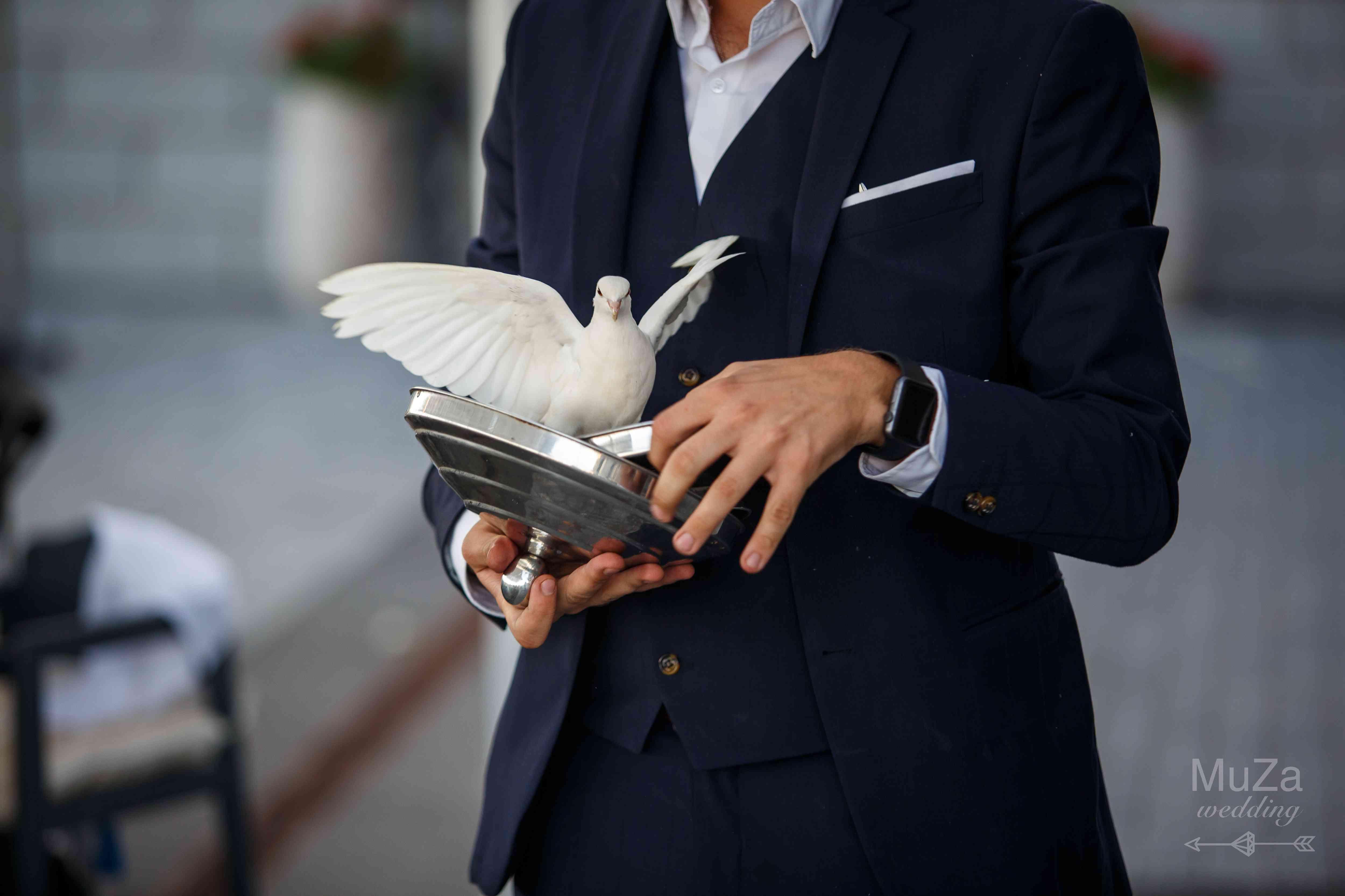 фокус с голубями на свадьбе