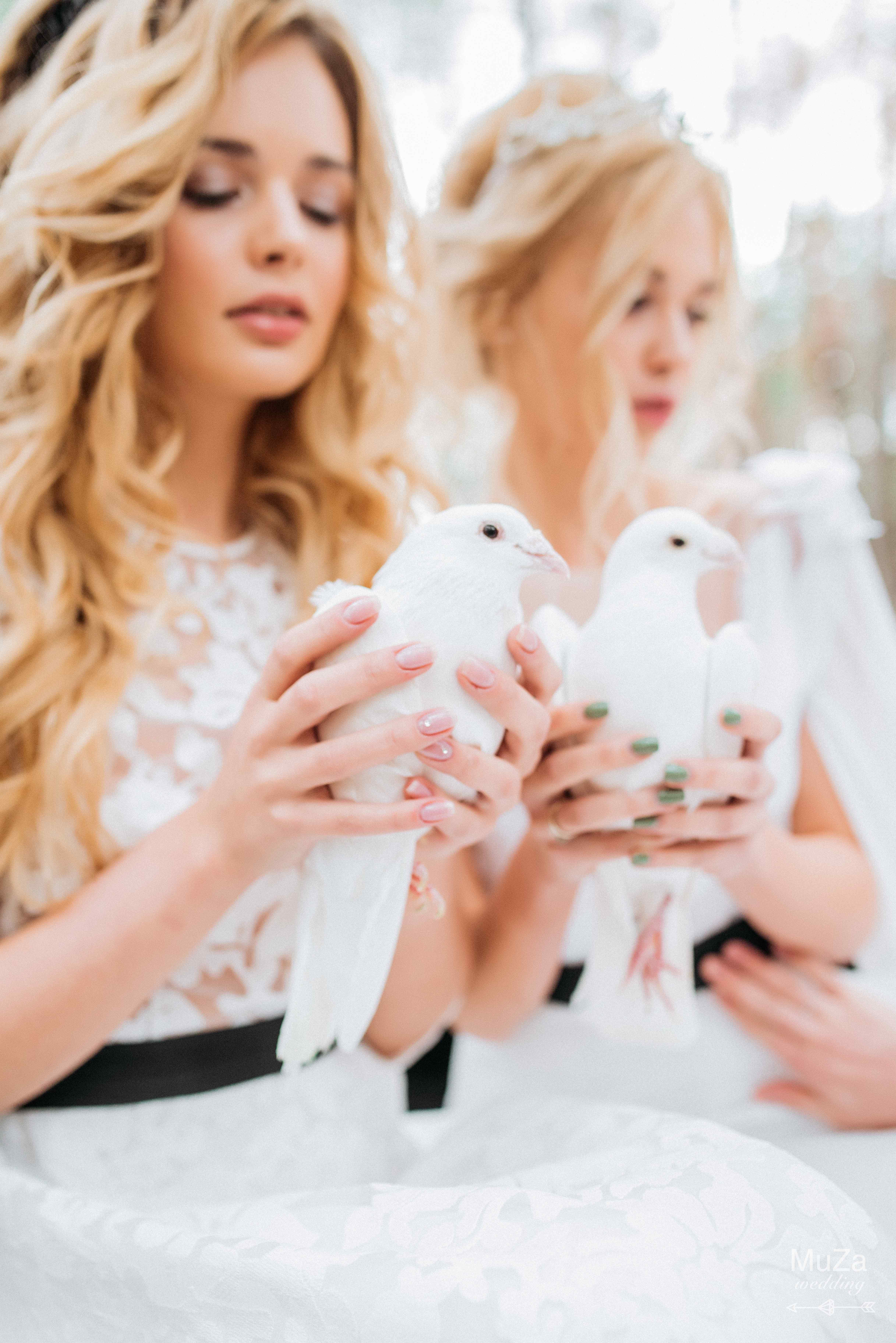 голуби на свадьбу, для фотопроекта