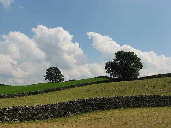 Fields, trees, clouds, blue sky