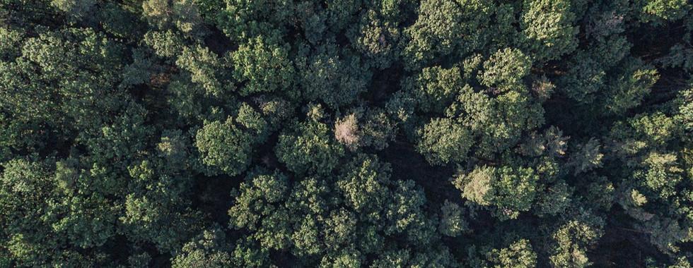 Drohnenaufnahme von Wald von oben mit de