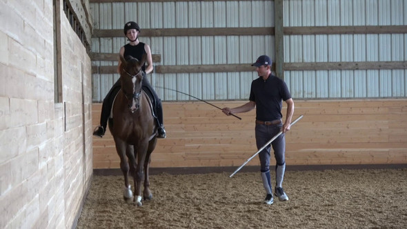Grounded: Joseph Newcomb On Practical In Hand Training For Every Horse