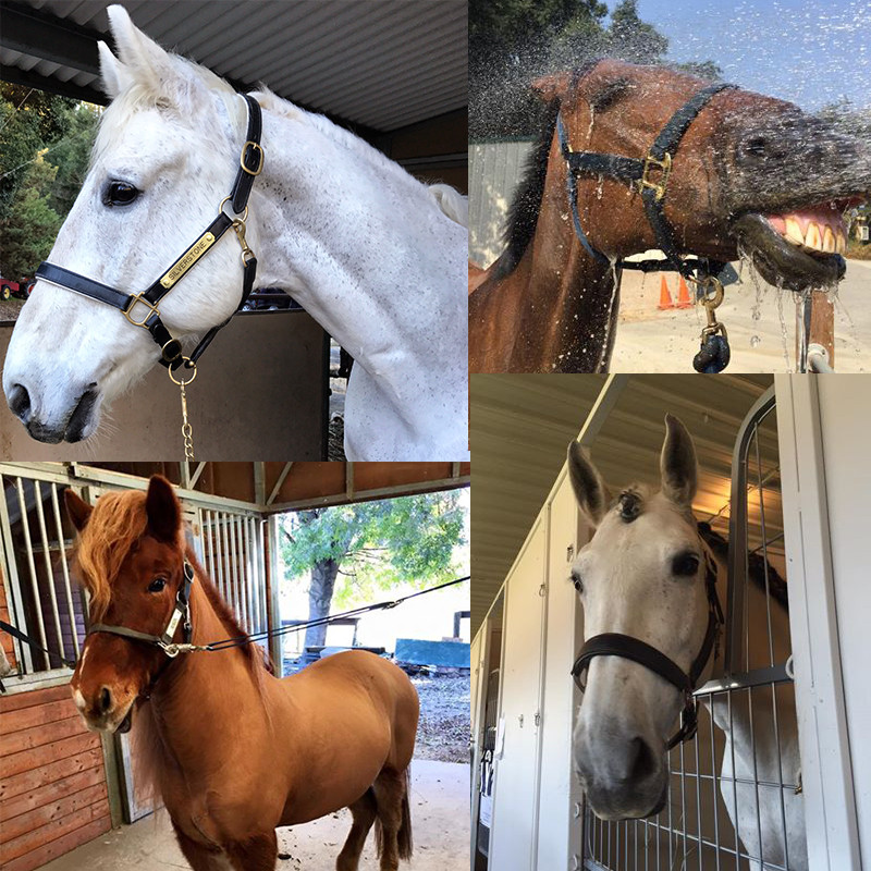 All of the dressage horses I've ridden in the past 18 months.