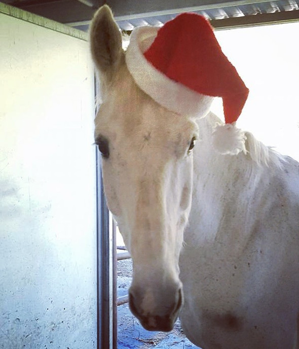 Santa, This Is How You Do An Equestrian Christmas