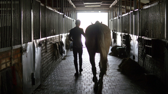 Equine Rehab: A Rider's 5 Step Plan To Emotional Recovery