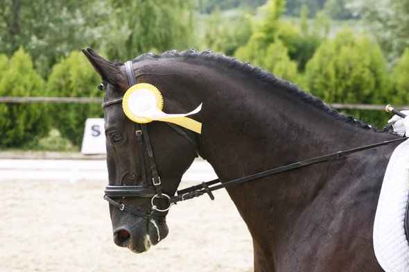 How To Land An Equestrian Sponsorship
