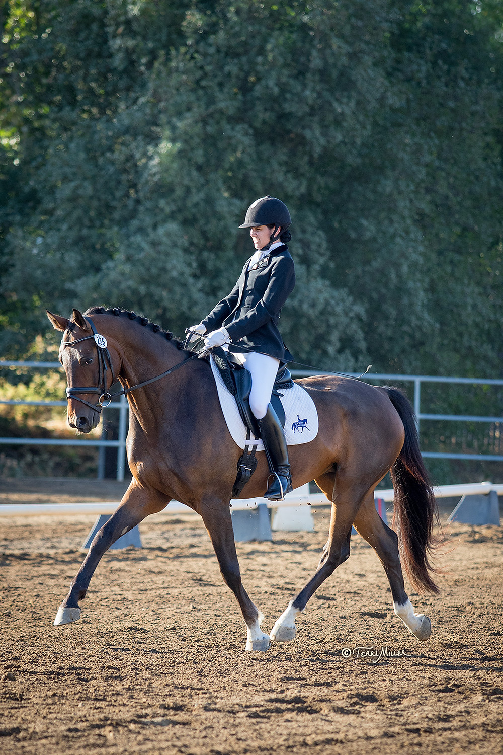 Katy Barglow riding Ferucicco, photo by Terri Miller