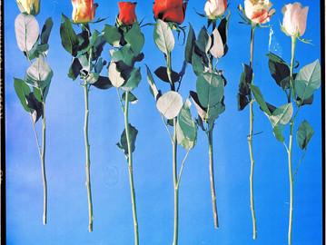 """""""This wonder never fades and flowers always die"""" by Jesse Keddie"""